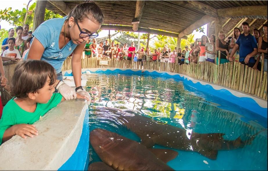 Tanque com tubarões no Oceanário de Aracaju  (Foto: Divulgação)