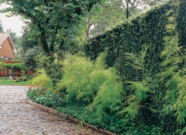 Além da trepadeira unha-de-gato (Ficus pumila), maciços de bambuza (Bambusa gracilis) dão volume e verticalidade ao muro. O degradê de tons de verde fica completo com a forração de grama amendoim (Arachis repens).  (Foto: Ricardo Novelli)