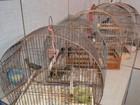 Polícia Ambiental de Cacoal resgata pássaros de cativeiro