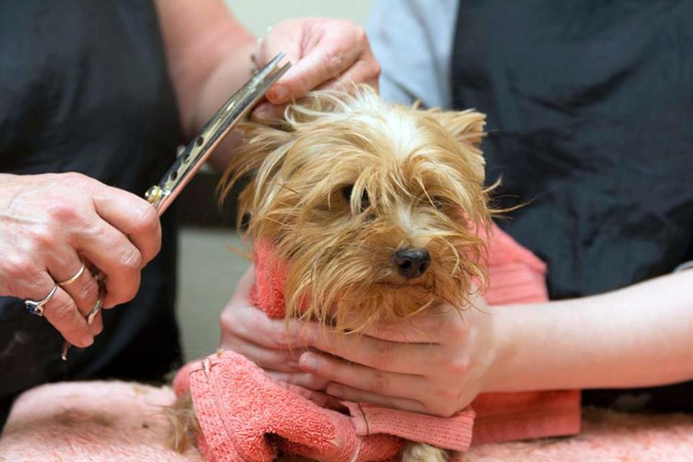 Cachorrinhos foram recuperados e postos para adoção (Foto: San Diego Humane Society via AP)