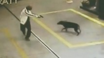 Criminoso armado ameaça frentista e cão; vídeo (Reprodução/TV Tem)