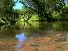Preservação de margem de rio vale dinheiro para agricultores de SC