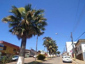 São Roque de MInas, árvores (Foto: G1/G1)