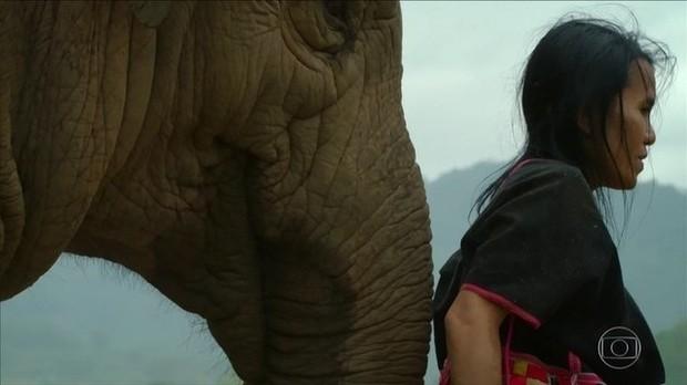 Mulher salva elefante do trabalho escravo e é 'adotada' pela manada (Foto: BBC)