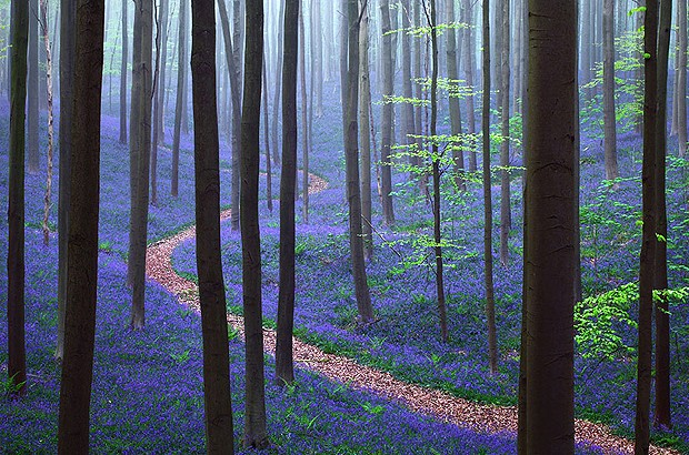 Floresta azul (Foto: Reprodução/Nômades Digitais)