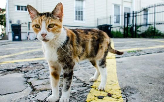 Gato de rua em Nova Orleans, Estados Unidos (Foto: Thinkstock)