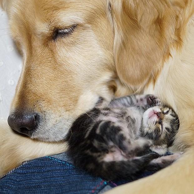 A cachorra cuidou da gatinha bebê como se fosse sua mãe (Foto: Divulgação/Instagram)