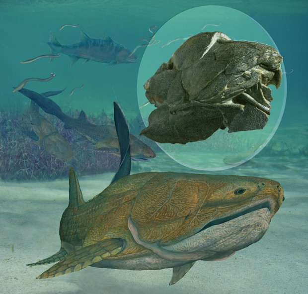 Fóssil com 419 milhões de idade faz cientistas repensarem como vertebrados com mandíbula adquiriram essas características (Foto: Brian Choo/Nature)
