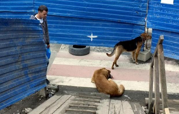 Cães são vistos nas ruas de Sochi, cidade russa que vai sediar as Olimpíadas de Inverno no início do próximo ano (Foto: Mikhail Mordasov/AFP)