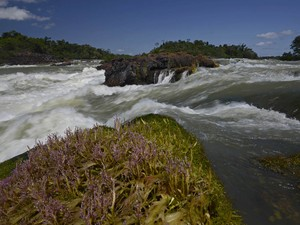 Doze hidrelétricas estão previstas para o rio Tapajós (Foto: Instituto Mamirauá)