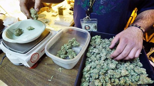 Comerciante manipula a droga: somente maiores de 21 poderão comprar a maconha  (Foto: Divulgação)