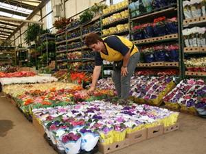 Mercado de Flores da Ceasa-Campinas (Foto: Divulgação/Ceasa Campinas)