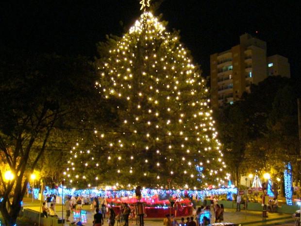 Árvore que é enfeitada há 59 anos é patrimônio de Tatuí, diz secretário (Foto: Thony Guedes/ Prefeitura Tatuí)