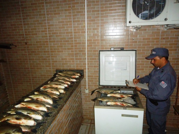 Não houve a comprovação por notas fiscais dos pescados (Foto: Polícia Ambiental/ Divulgação)