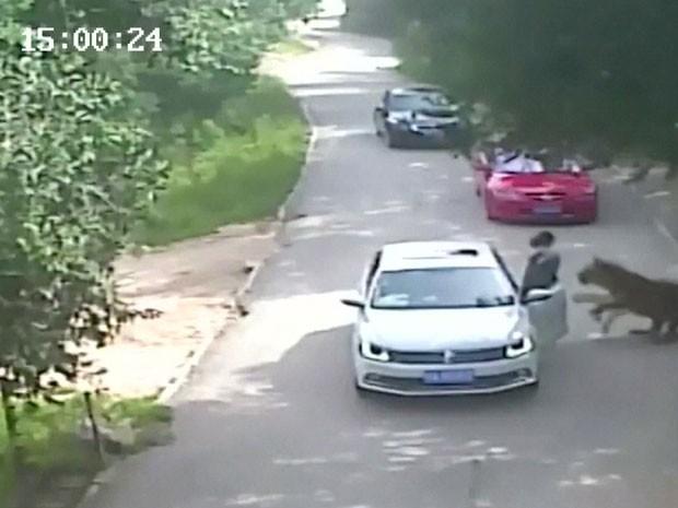 GNEWS - Tigre ataca mulher em parque de vida selvagem em Pequim, na China (Foto: Reprodução GloboNews)