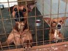 Peruíbe abre inscrição para castração de cães e gatos