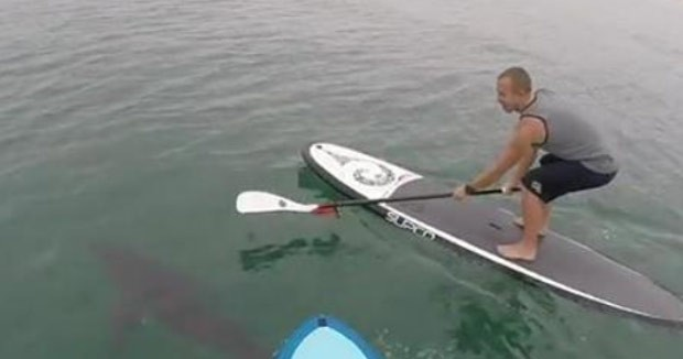 Dupla praticava stand up paddle na Califórnia (Foto: Reprodução/YouTube/Courtney Hemerick)