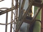 Biólogo registra fidelidade de casal de falcões americanos em Maringá