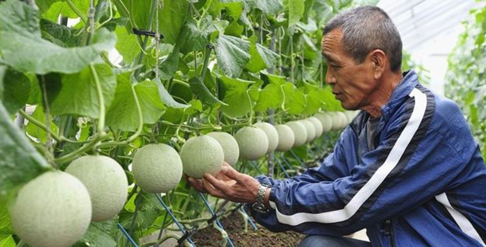 Durante séculos, japoneses aperfeiçoaram a forma de produzir frutas e carnes (Foto: Alfie Goodrich)
