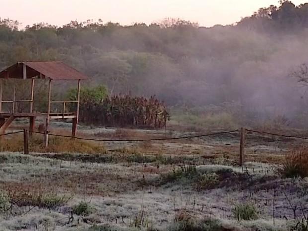 Geada Ponta Porã (Foto: Reprodução/ TV Morena)