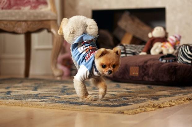 cão chamado Jiff entrou para o Guinness ao conseguir correr com duas patas (Foto: Kevin Scott Ramos/Guinness World Records/AP Photo)