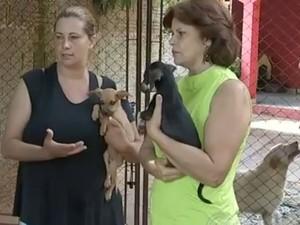Voluntárias recolhem todos os animais que encontram nas ruas  (Foto: Reprodução / TV TEM)