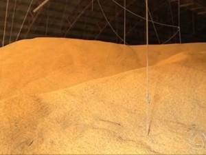 Soja foi o principal produto exportado por Mato Grosso do Sul no acumulado de janeiro a maio de 2014 (Foto: Reprodução/TV Morena)
