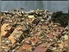 Soro contra picadas de abelhas será testado em humanos na Unesp