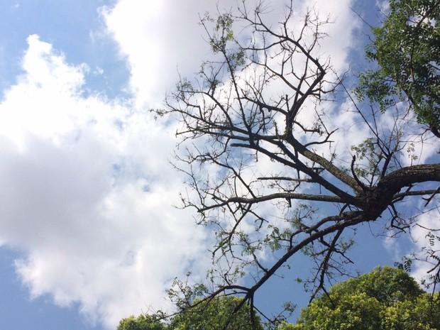 Céu com poucas nuvens em Campo Grande neste domingo (13) (Foto: Maria Caroline Palieraqui/G1 MS)