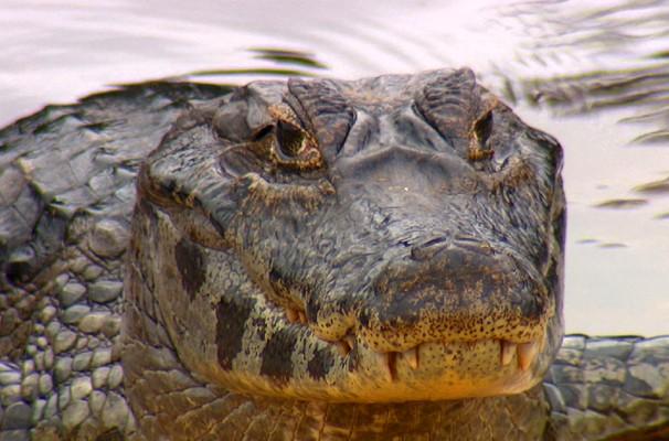 Equipe do Terra da Gente fez flagrante de animais selvagens no Pantanal (Foto: Reprodução / EPTV)