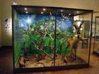 Museu recebe inscrições para curso de férias no Bosque a partir de terça