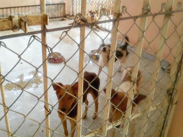 Cães estão sendo recolhidos em abrigos montados pela Prefeitura em Cruzeiro do Sul  (Foto: Anny Barbosa/G1)