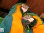 Neste sábado (11), você vai conhecer o Parque das Aves