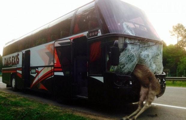 Ônibus que saía de Belarus atingiu alce em cheio a camiho de Kiev, na Ucrânia (Foto: Central European News/Europics/Caters News)