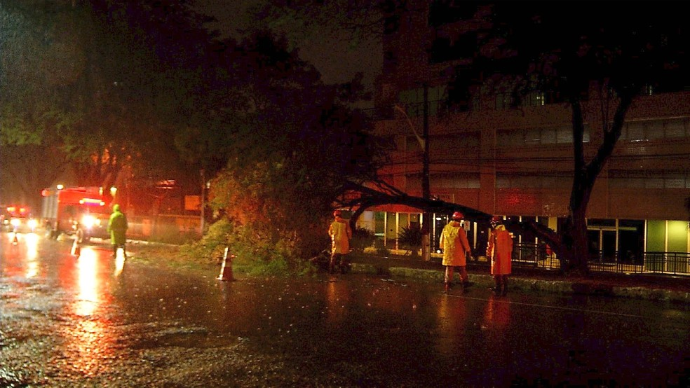 No Tirol, uma árvore partiu e galhos caíram sobre a Av. Hermes da Fonseca, uma das mais movimentadas da cidade (Foto: Reprodução/Inter TV Cabugi)