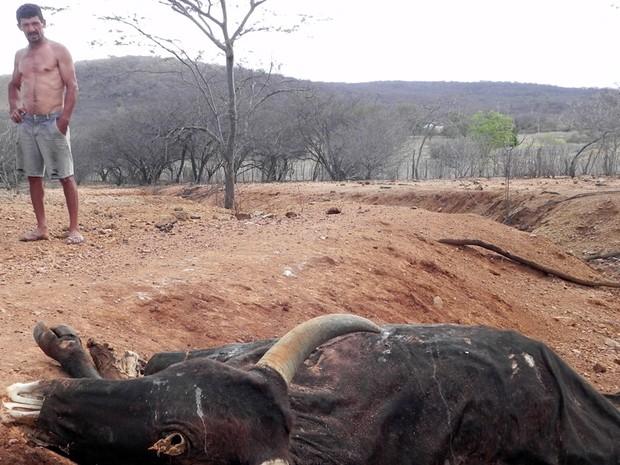 Com a seca, muitos animais acabaram morrendo de sede e de fome (Foto: Taiguara Rangel/G1)