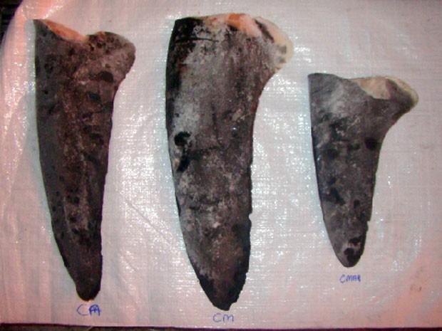 Barbatanas peitorais de tubarão azul à esquerda, tubarão misto no centro e tubarão marracho à direita (Foto: Ibama/Divulgação)