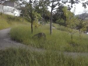 Internauta diz que mato alto é consequência da falta de manutenção da Prefeitura. (Foto: Wanderley Fernandes/ VC no G1)