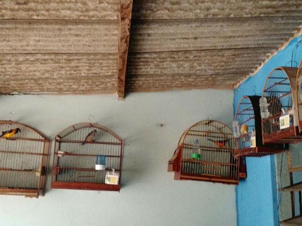 Apreensão de pássaros silvestres em Uberlândia (Foto: Polícia Militar de Meio Ambiente/ Divulgação)
