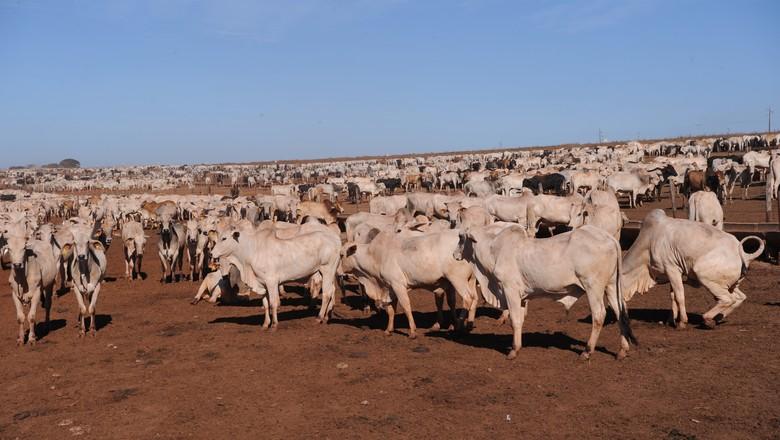 boi-corte-nelore-confinamento-boi-gordo-pecuaria (Foto: Ernesto de Souza/Ed. Globo)