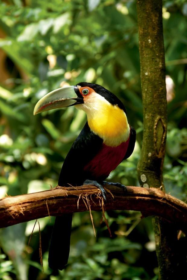No Parque das Aves, é possível ver várias espécies de animais (Foto: Divulgação)
