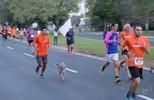 Etapa de Bauru do TEM Running 2017 será realizada no dia 1º de julho