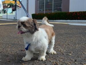 Animais devem ser levados para caminhadas leves e em horários adequados (Foto: Fabiana Figueiredo/G1)