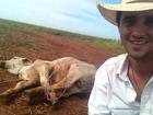 Fael mostra sua habilidade e laça boi em fazenda