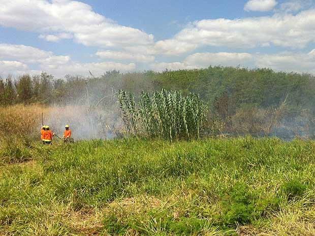 Bombeiros combatem incêndio em área de cerrado no Distrito Federal nesta quarta-feira (6) (Foto: Isabella Formiga/G1)