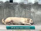 Maus-tratos contra animais serão investigados em CPI no ES