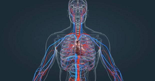 CardioHemo