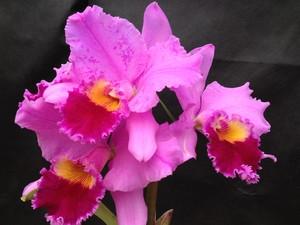 tipos de orquideas (Foto: Debora Pivotto)