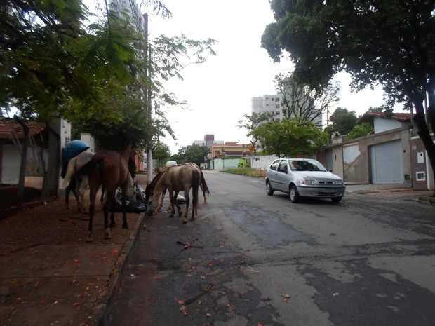 carro transita na  escola augusto veloso (Foto: Cida Santana/G1)