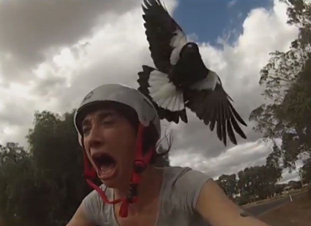 ciclista Terry Nicholson ficou apavorada ao ser atacada por pássaro (Foto: Reprodução/YouTube/Michael Billings)